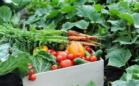 Jak przechowywać warzywa, żeby zachować ich świeżość i apetyczny wygląd?