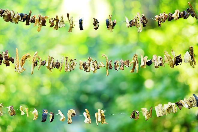 Jak suszyć grzyby na słońcu? [WIDEO]